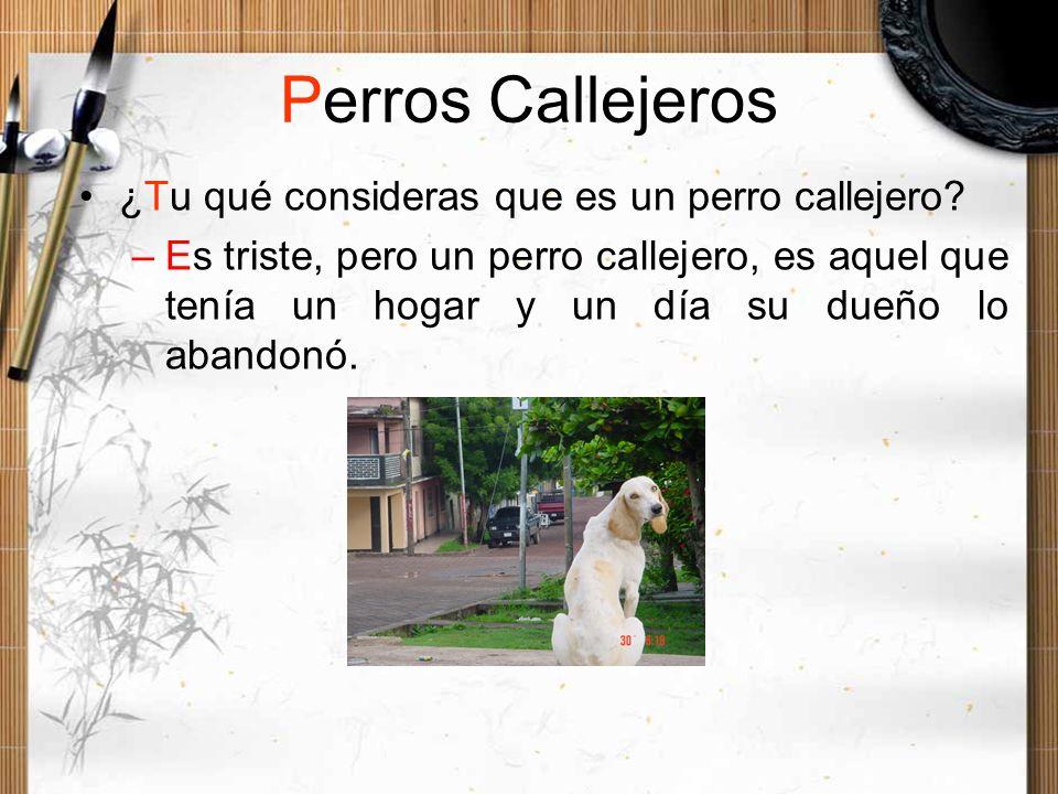 Perros Callejeros ¿Tu qué consideras que es un perro callejero? –Es triste, pero un perro callejero, es aquel que tenía un hogar y un día su dueño lo