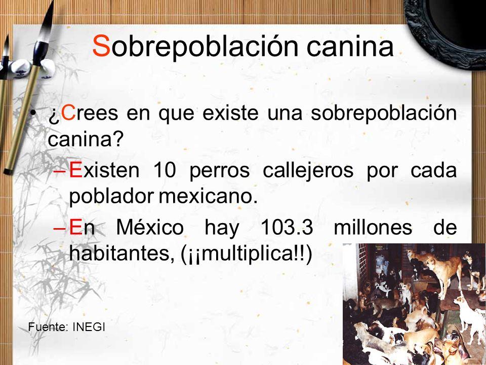 Sobrepoblación canina ¿Crees en que existe una sobrepoblación canina? –Existen 10 perros callejeros por cada poblador mexicano. –En México hay 103.3 m