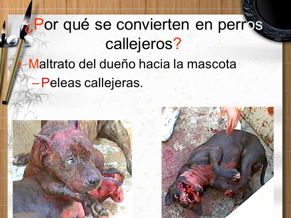 ¿Por qué se convierten en perros callejeros? Maltrato del dueño hacia la mascota –Peleas callejeras.
