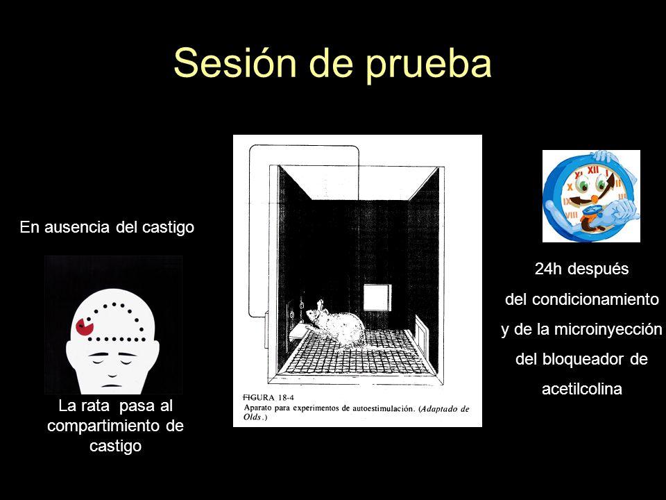 Sesión de prueba En ausencia del castigo 24h después del condicionamiento y de la microinyección del bloqueador de acetilcolina La rata pasa al compar