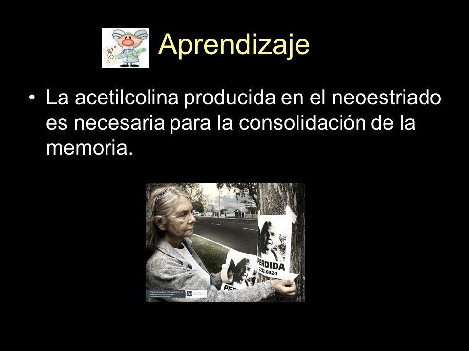 Aprendizaje La acetilcolina producida en el neoestriado es necesaria para la consolidación de la memoria.