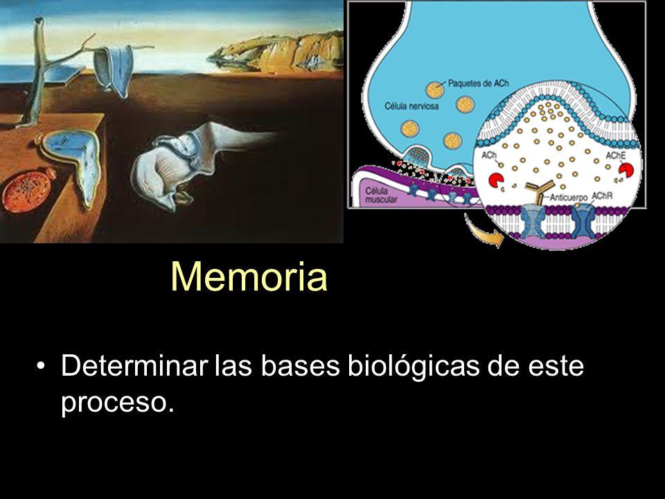 Determinar las bases biológicas de este proceso. Memoria
