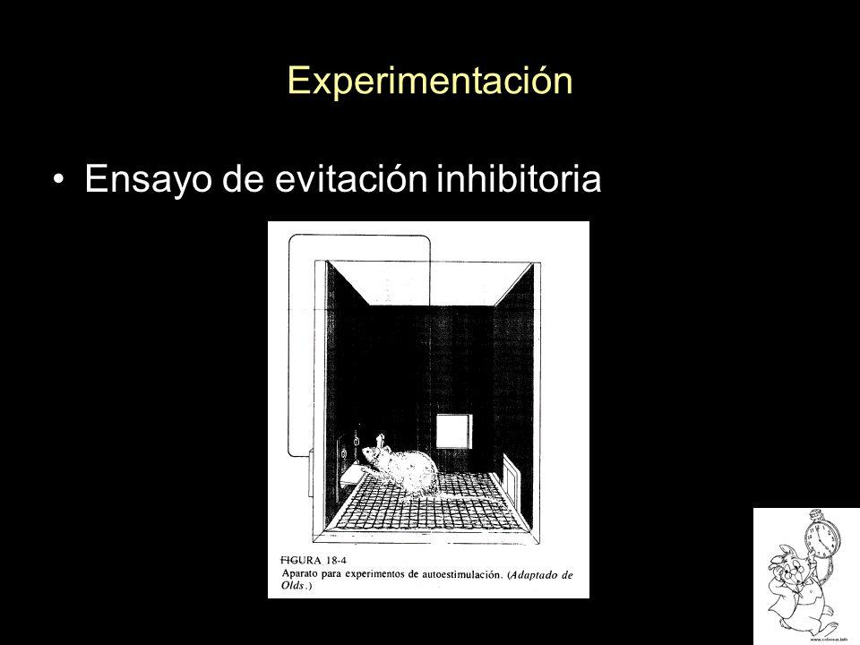 Experimentación Recuperación Implantación de cánulas Inyección del bloqueador de acetilcolina