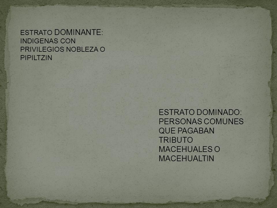 ESTRATO DOMINANTE : INDIGENAS CON PRIVILEGIOS NOBLEZA O PIPILTZIN ESTRATO DOMINADO: PERSONAS COMUNES QUE PAGABAN TRIBUTO MACEHUALES O MACEHUALTIN