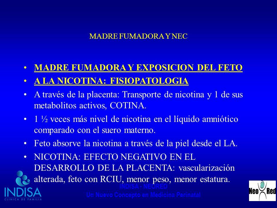 INDISA - NEORED Un Nuevo Concepto en Medicina Perinatal MADRE FUMADORA Y NEC MADRE FUMADORA Y EXPOSICION DEL FETO A LA NICOTINA: FISIOPATOLOGIA A trav