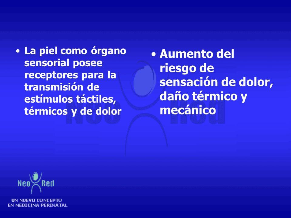 Disminución de la cohesión entre la dermis y epidermis Edema en la dermis lo que reduce el flujo sanguíneo Aumenta el riesgo de daño por uso de adhesi