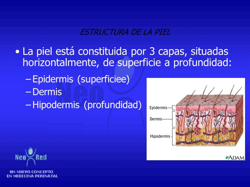 FUNCIONES DE LA PIEL Protección o barrera Termorregulación Excreción Capacidad sensitiva (de relación) Secretora Inmunológica Nutricional Social