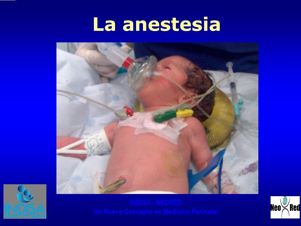 INDISA - NEORED Un Nuevo Concepto en Medicina Perinatal La anestesia