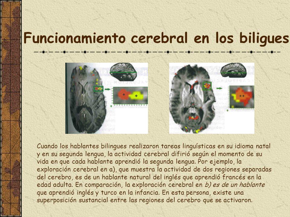 Funcionamiento cerebral en los biligues Cuando los hablantes bilingues realizaron tareas linguísticas en su idioma natal y en su segunda lengua, la ac