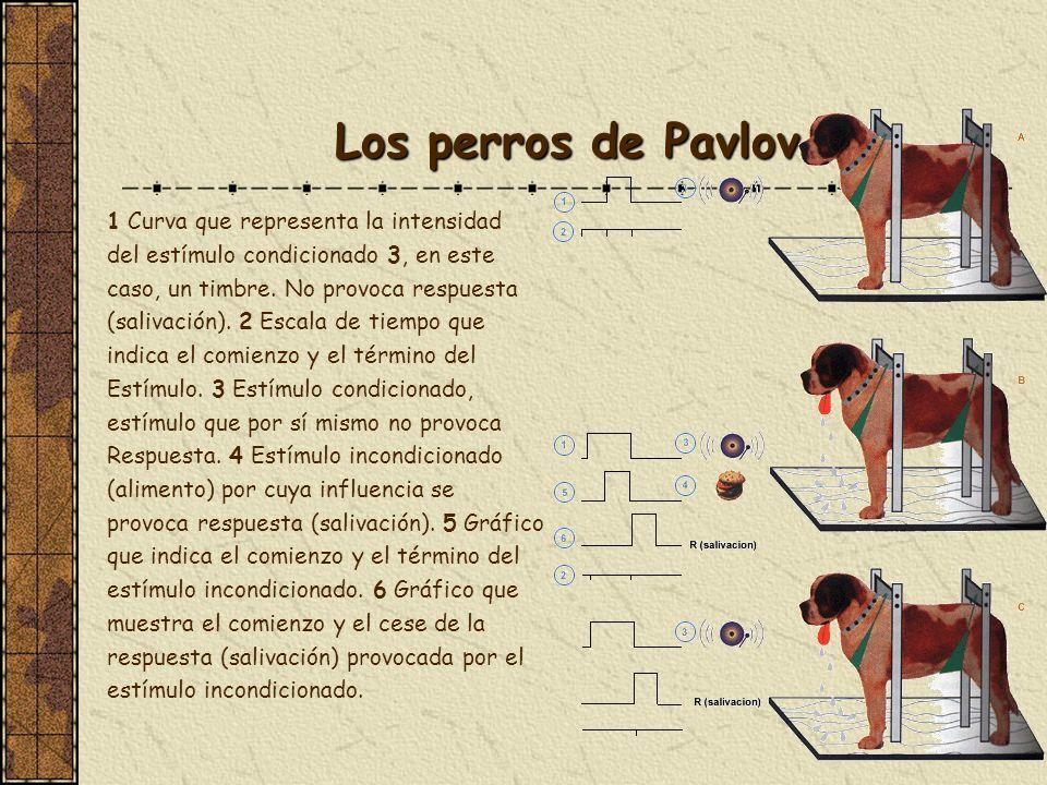 Los perros de Pavlov 1 Curva que representa la intensidad del estímulo condicionado 3, en este caso, un timbre. No provoca respuesta (salivación). 2 E
