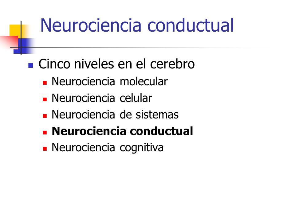 Neurociencia conductual Cinco niveles en el cerebro Neurociencia molecular Neurociencia celular Neurociencia de sistemas Neurociencia conductual Neurociencia cognitiva
