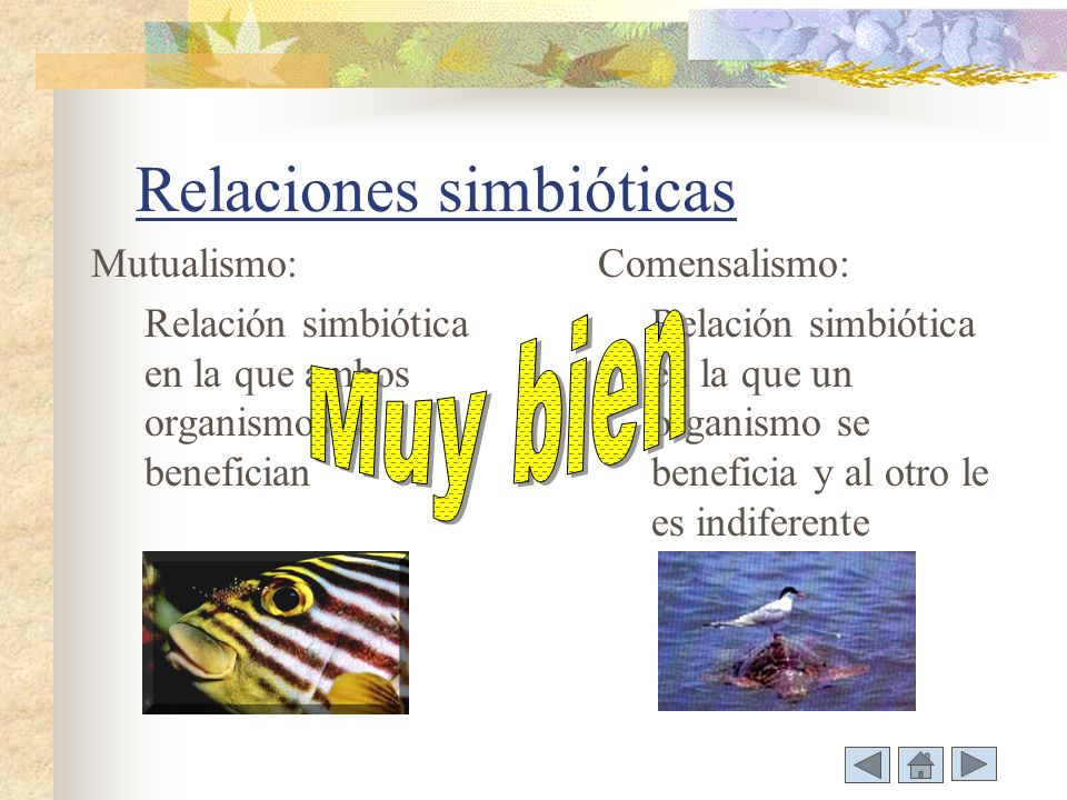 Relaciones simbióticas Mutualismo: Relación simbiótica en la que ambos organismos se benefician Comensalismo: Relación simbiótica en la que un organismo se beneficia y al otro le es indiferente