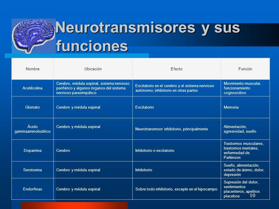 10 Neurotransmisores y sus funciones Neurotransmisores y sus funciones NombreUbicaciónEfectoFunción Acetilcolina Cerebro, médula espinal, sistema nerv