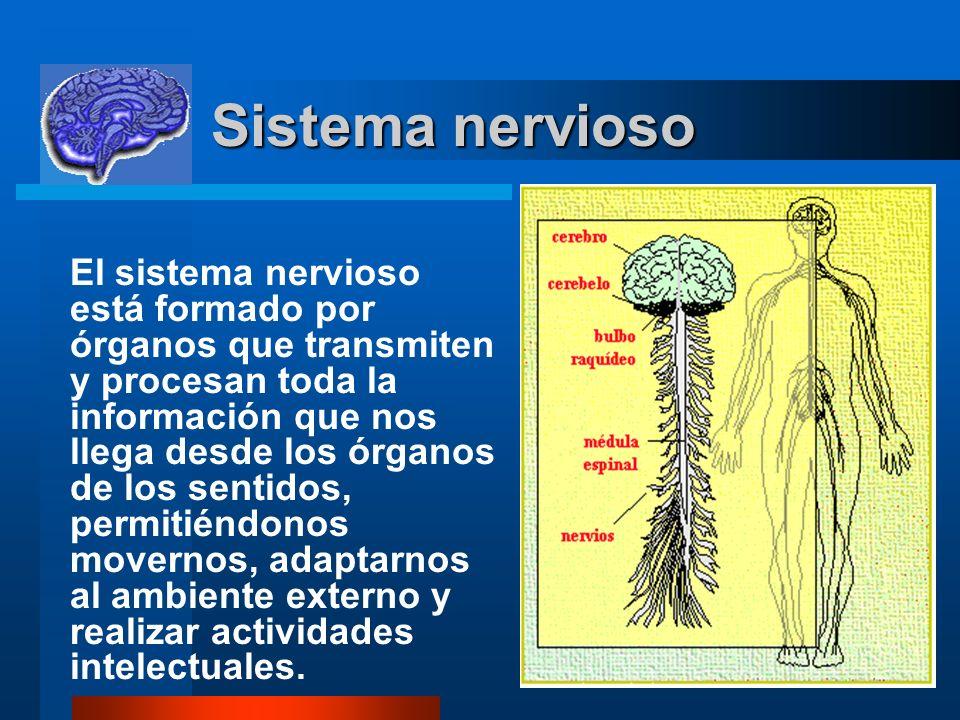 11 Sistema nervioso Sistema nervioso El sistema nervioso está formado por órganos que transmiten y procesan toda la información que nos llega desde lo