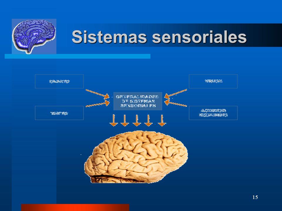 15 Sistemas sensoriales Sistemas sensoriales