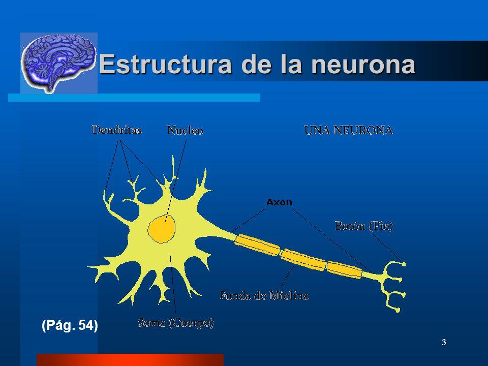 3 Estructura de la neurona Estructura de la neurona (Pág. 54)