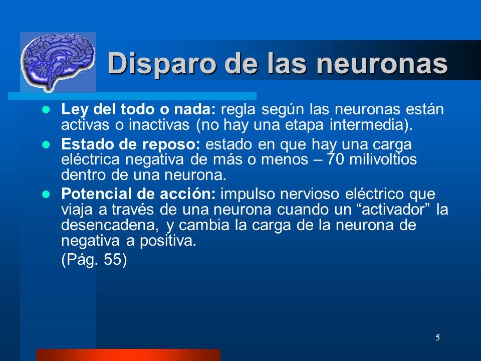 5 Disparo de las neuronas Disparo de las neuronas Ley del todo o nada: regla según las neuronas están activas o inactivas (no hay una etapa intermedia