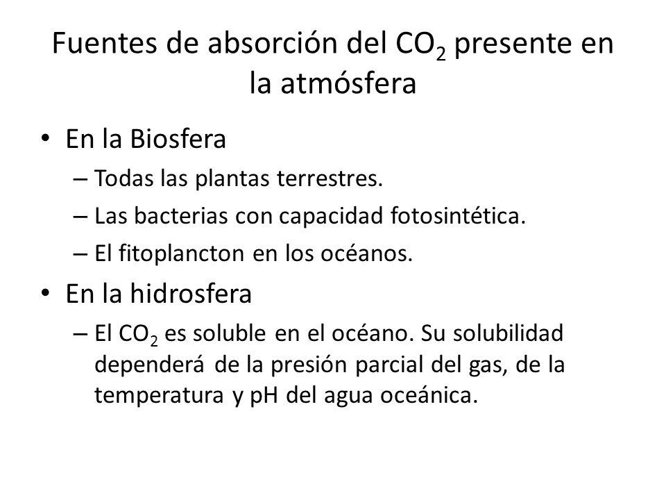 Fuentes de absorción del CO 2 presente en la atmósfera En la Biosfera – Todas las plantas terrestres. – Las bacterias con capacidad fotosintética. – E