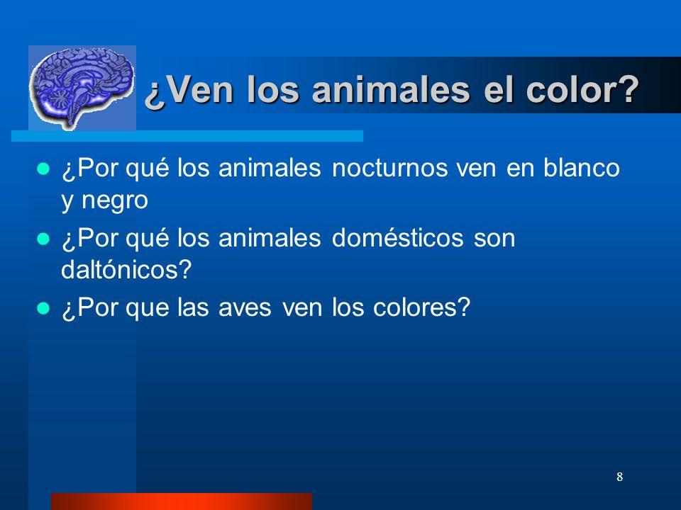 8 ¿Ven los animales el color? ¿Ven los animales el color? ¿Por qué los animales nocturnos ven en blanco y negro ¿Por qué los animales domésticos son d