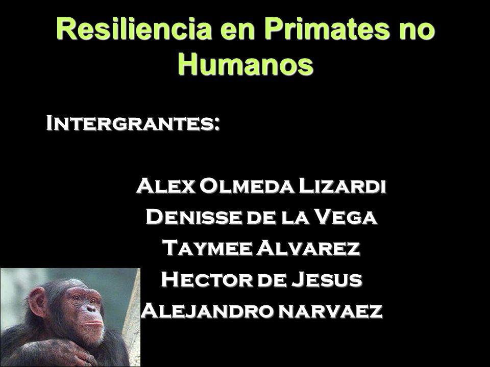 Resiliencia en Primates no Humanos Intergrantes: Alex Olmeda Lizardi Denisse de la Vega Taymee Alvarez Hector de Jesus Alejandro narvaez