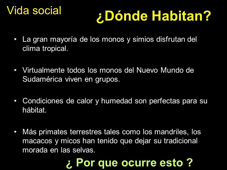Vida social La gran mayoría de los monos y simios disfrutan del clima tropical. Virtualmente todos los monos del Nuevo Mundo de Sudamérica viven en gr