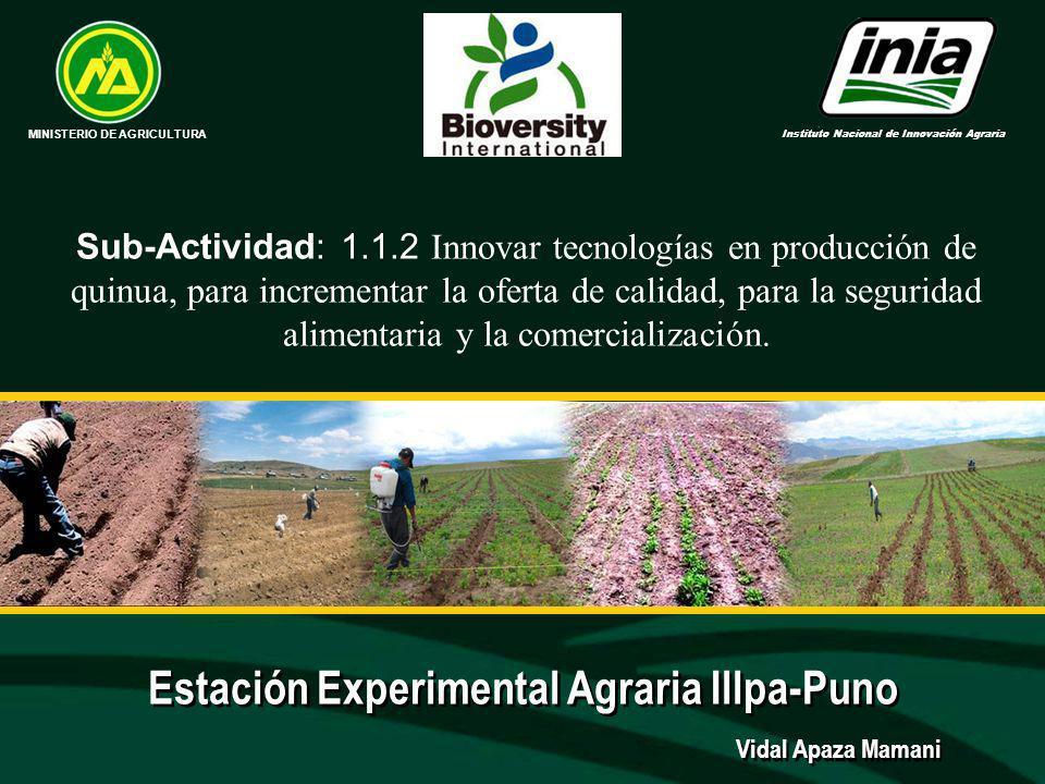 Experimentos: 2007-2008 1.Abonamiento orgánico y tres densidades de siembra en quinua en el distrito de Pilcuyo (Kallachoko) 2.Abonamiento orgánico en sistema de siembra de quinua a cajoneo en el distrito de Cabana (Cieneguilla).