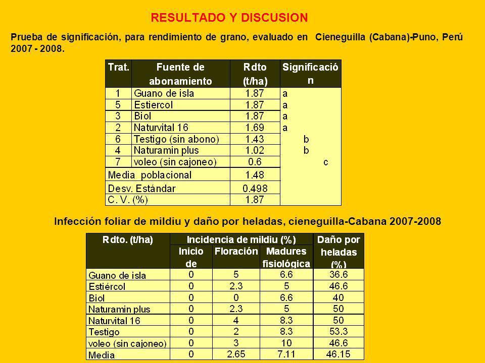RESULTADO Y DISCUSION Prueba de significación, para rendimiento de grano, evaluado en Cieneguilla (Cabana)-Puno, Perú 2007 - 2008. Infección foliar de