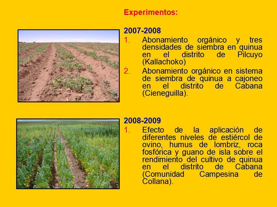 Experimentos: 2007-2008 1.Abonamiento orgánico y tres densidades de siembra en quinua en el distrito de Pilcuyo (Kallachoko) 2.Abonamiento orgánico en