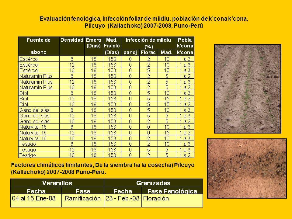 Evaluación fenológica, infección foliar de mildiu, población de kcona kcona, Pilcuyo (Kallachoko) 2007-2008, Puno-Perú Factores climáticos limitantes,