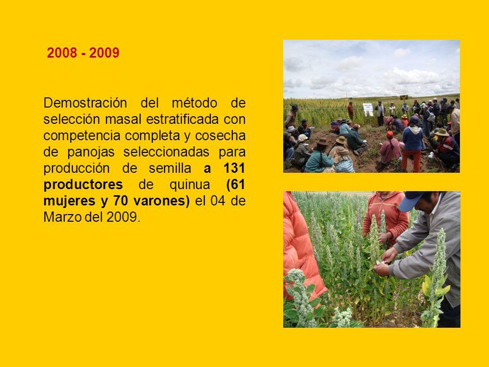 Demostración del método de selección masal estratificada con competencia completa y cosecha de panojas seleccionadas para producción de semilla a 131