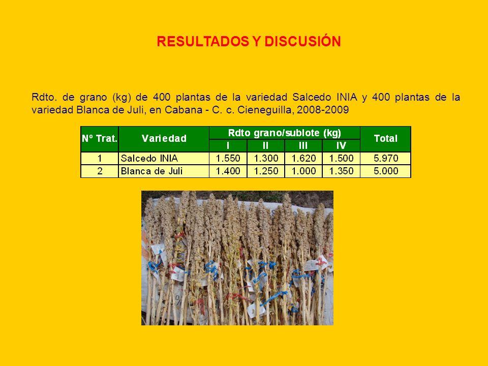 RESULTADOS Y DISCUSIÓN Rdto. de grano (kg) de 400 plantas de la variedad Salcedo INIA y 400 plantas de la variedad Blanca de Juli, en Cabana - C. c. C