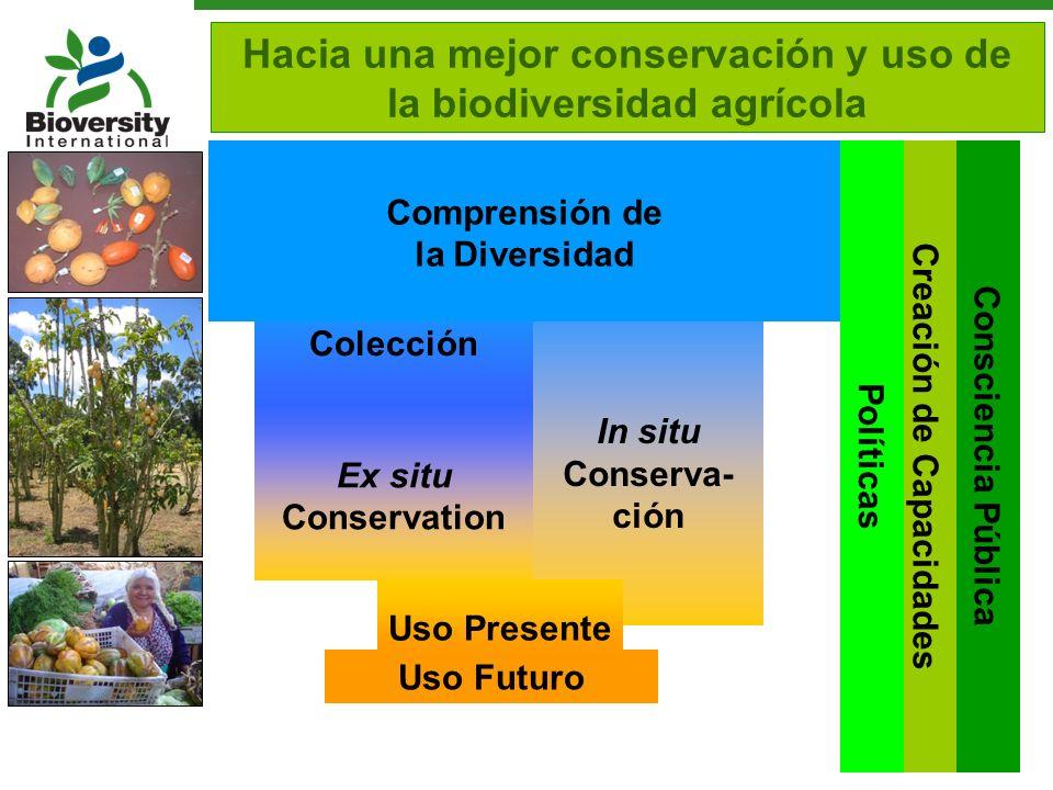 Colección In situ Conserva- ción Creación de Capacidades Consciencia Pública Hacia una mejor conservación y uso de la biodiversidad agrícola Uso Futur