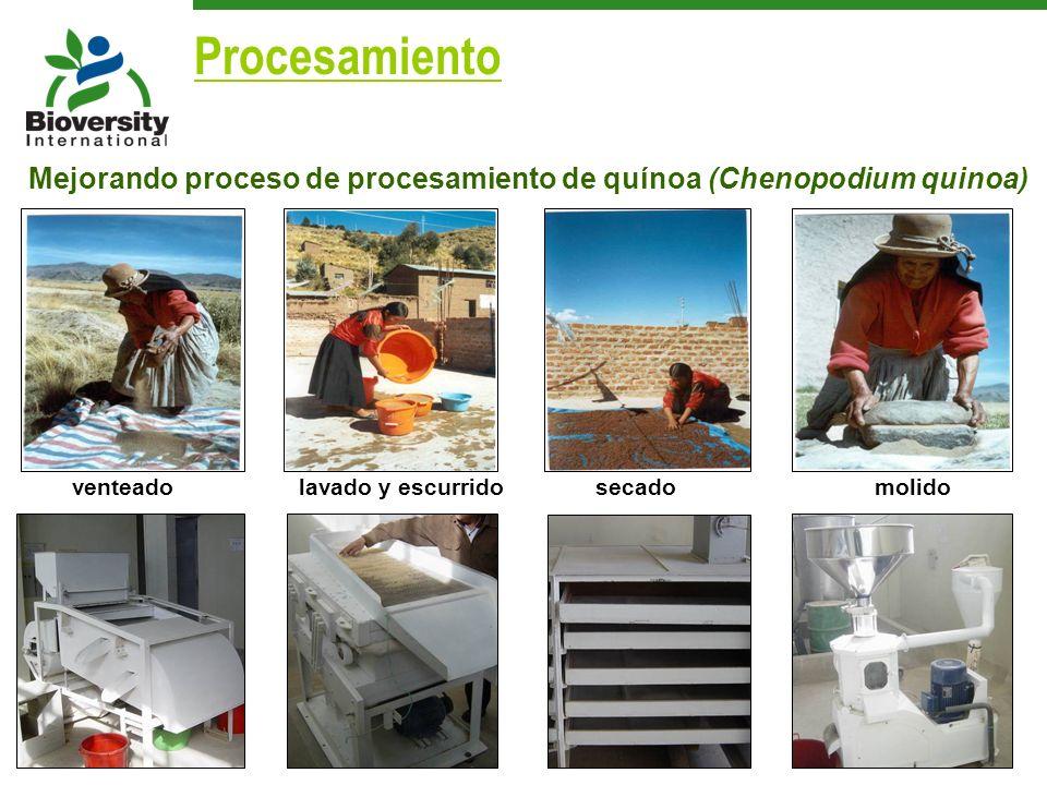 venteadolavado y escurrido secadomolido Mejorando proceso de procesamiento de quínoa (Chenopodium quinoa) Procesamiento