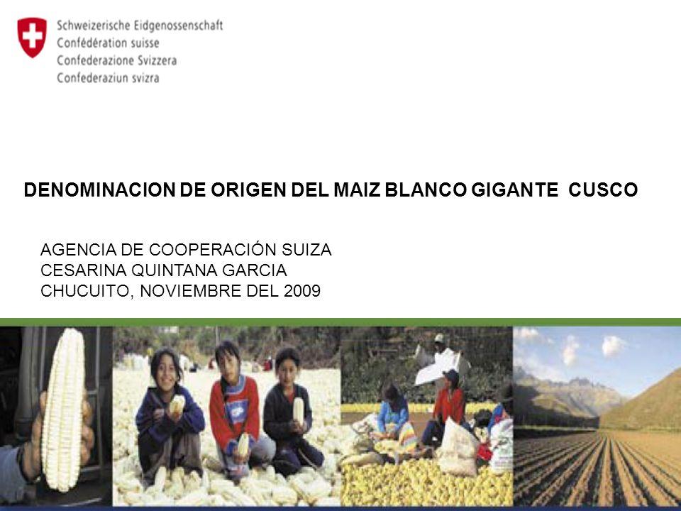 DENOMINACION DE ORIGEN DEL MAIZ BLANCO GIGANTE CUSCO AGENCIA DE COOPERACIÓN SUIZA CESARINA QUINTANA GARCIA CHUCUITO, NOVIEMBRE DEL 2009