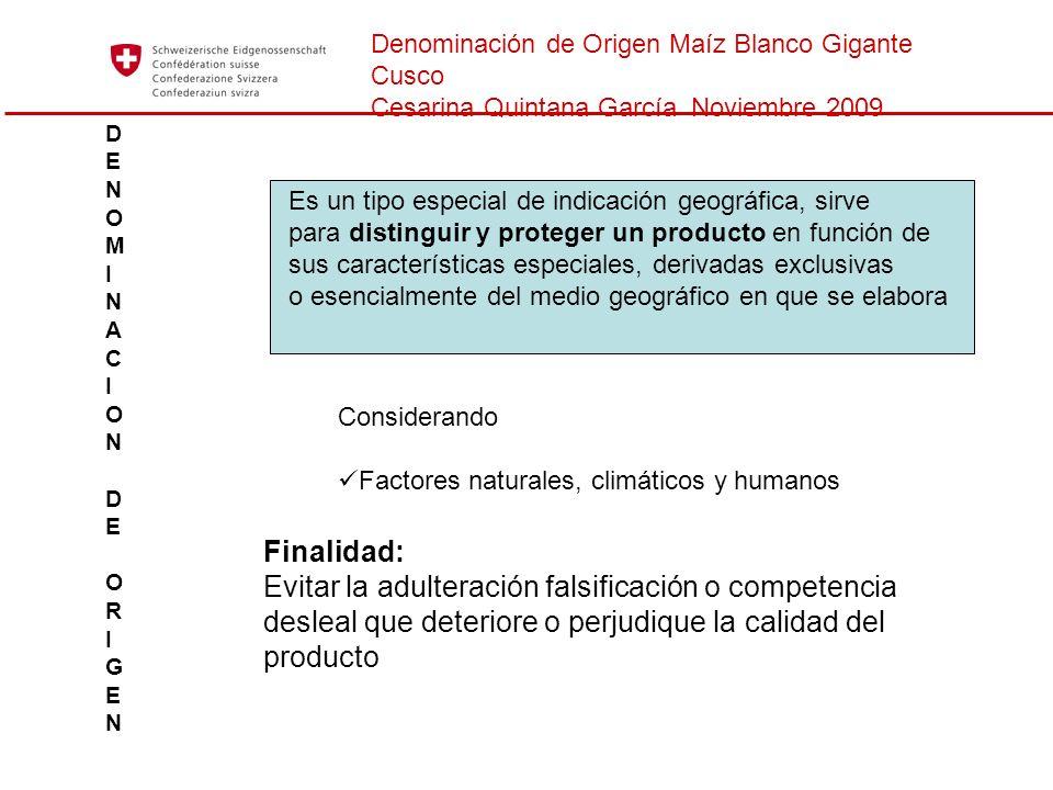 Denominación de Origen Maíz Blanco Gigante Cusco Cesarina Quintana García Noviembre 2009 DENOMINACION DEORIGENDENOMINACION DEORIGEN Es un tipo especia