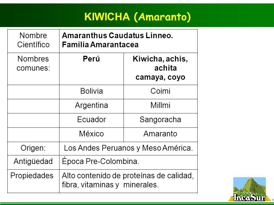 KIWICHA (Amaranto) Nombre Científico Amaranthus Caudatus Linneo. Familia Amarantacea Nombres comunes: PerúKiwicha, achis, achita camaya, coyo BoliviaC