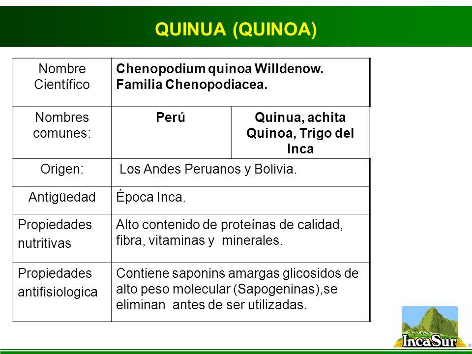 QUINUA (QUINOA) Nombre Científico Chenopodium quinoa Willdenow. Familia Chenopodiacea. Nombres comunes: PerúQuinua, achita Quinoa, Trigo del Inca Orig