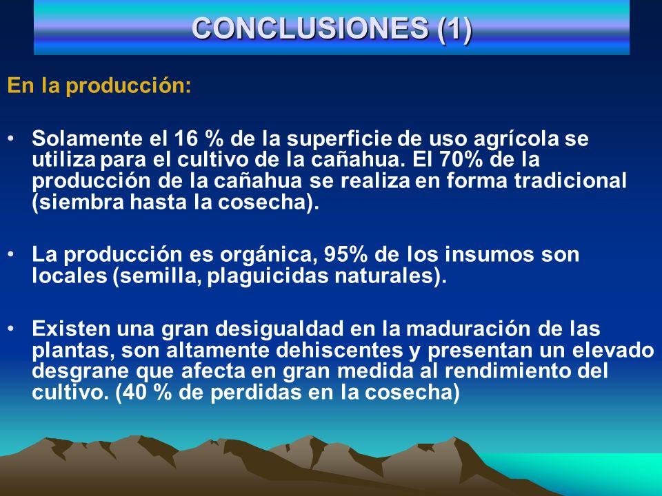 CONCLUSIONES (1) En la producción: Solamente el 16 % de la superficie de uso agrícola se utiliza para el cultivo de la cañahua. El 70% de la producció