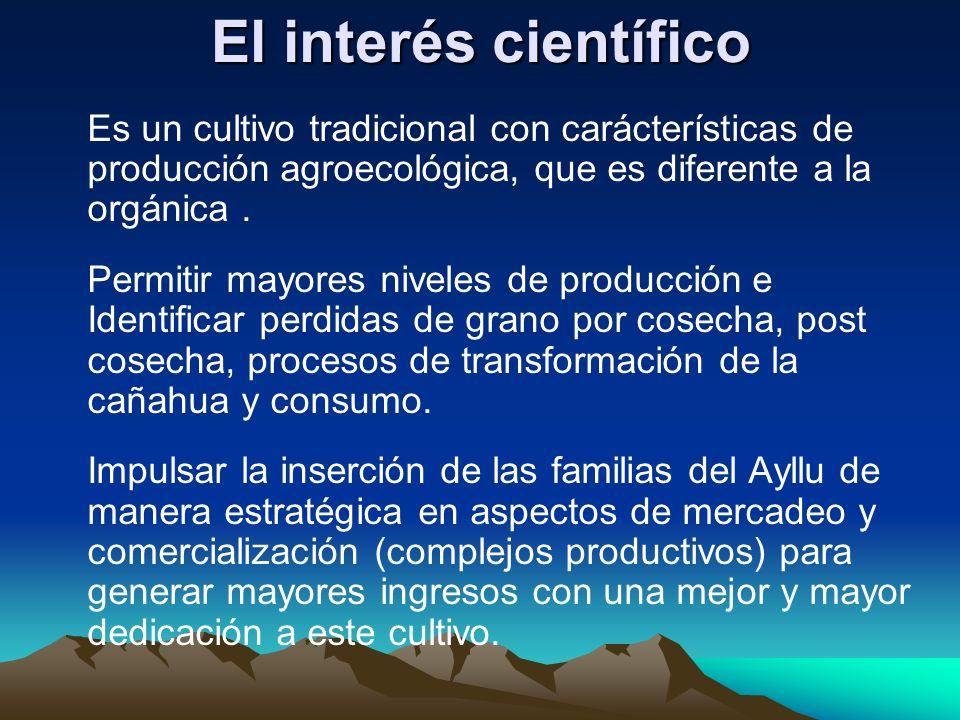 El interés científico Es un cultivo tradicional con carácterísticas de producción agroecológica, que es diferente a la orgánica. Permitir mayores nive