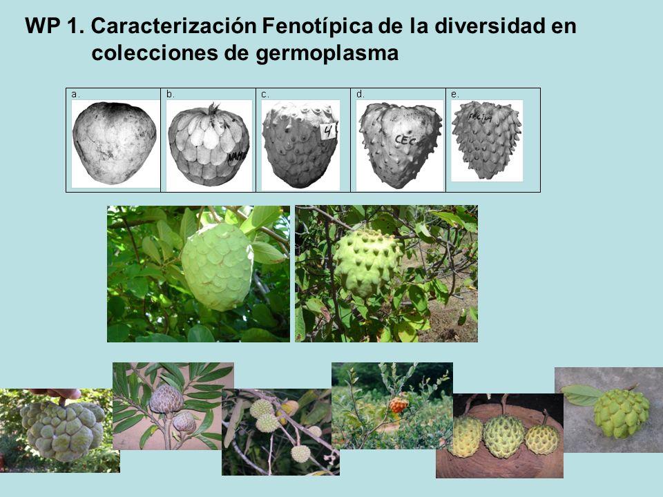 WP 1. Caracterización Fenotípica de la diversidad en colecciones de germoplasma