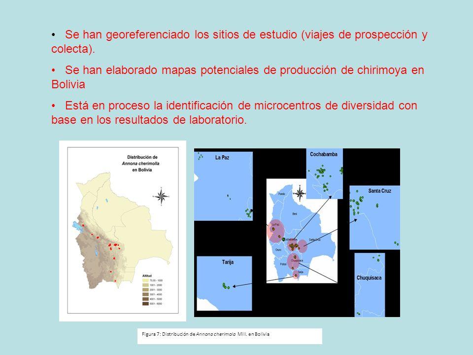 Se han georeferenciado los sitios de estudio (viajes de prospección y colecta). Se han elaborado mapas potenciales de producción de chirimoya en Boliv