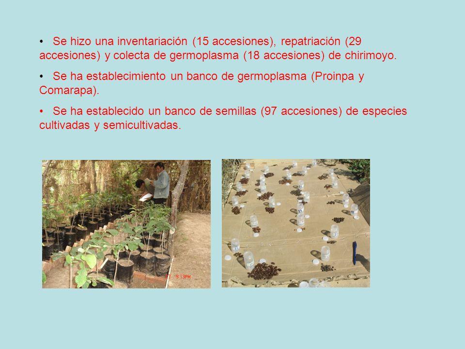 Se hizo una inventariación (15 accesiones), repatriación (29 accesiones) y colecta de germoplasma (18 accesiones) de chirimoyo. Se ha establecimiento