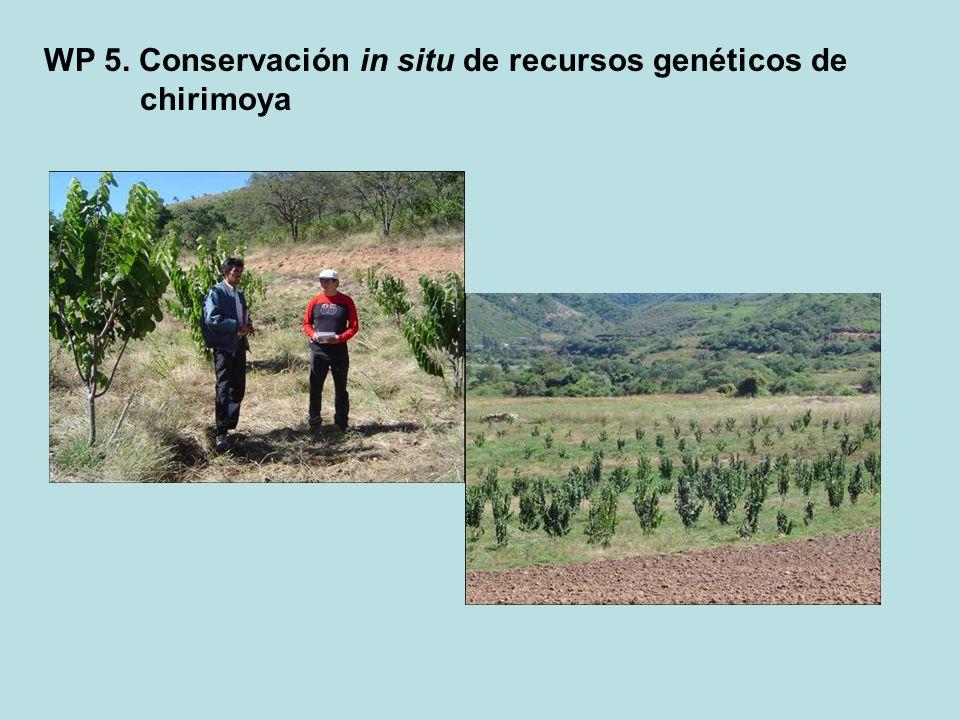 WP 5. Conservación in situ de recursos genéticos de chirimoya