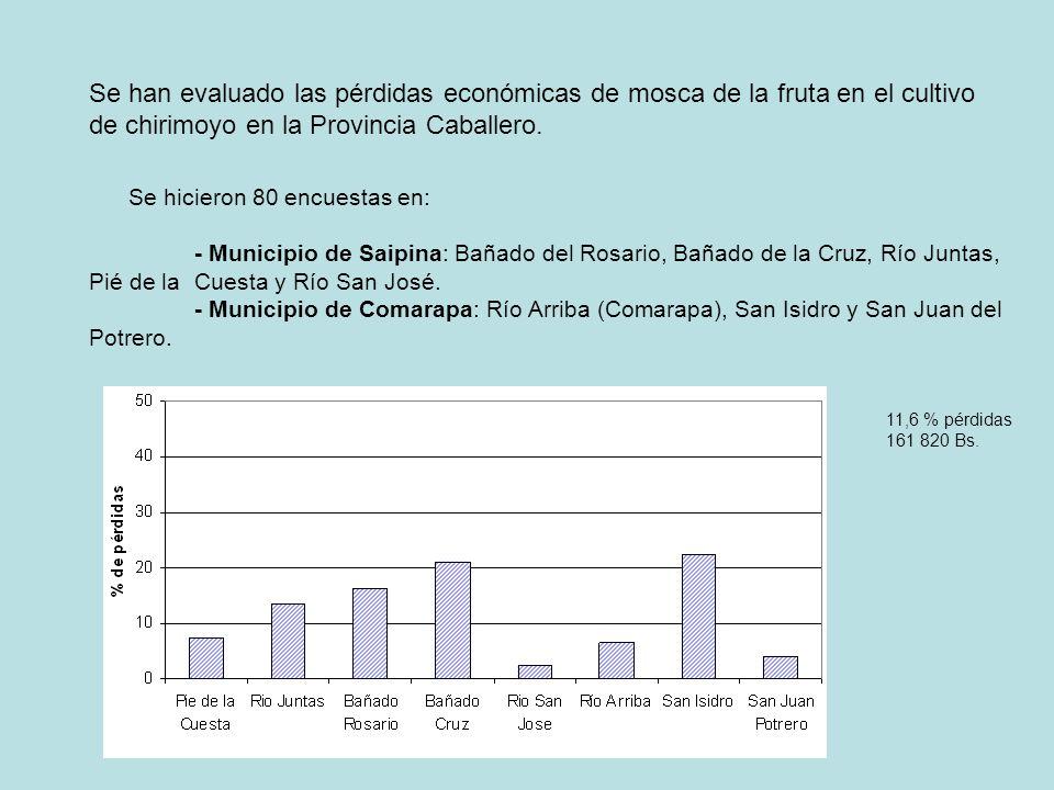 Se han evaluado las pérdidas económicas de mosca de la fruta en el cultivo de chirimoyo en la Provincia Caballero. Se hicieron 80 encuestas en: - Muni