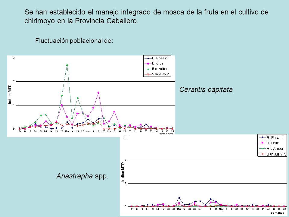 Se han establecido el manejo integrado de mosca de la fruta en el cultivo de chirimoyo en la Provincia Caballero. Fluctuación poblacional de: Ceratiti