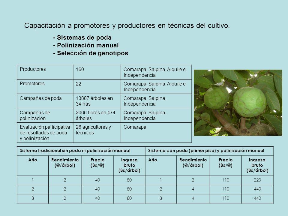 Capacitación a promotores y productores en técnicas del cultivo. - Sistemas de poda - Polinización manual - Selección de genotipos Sistema tradicional