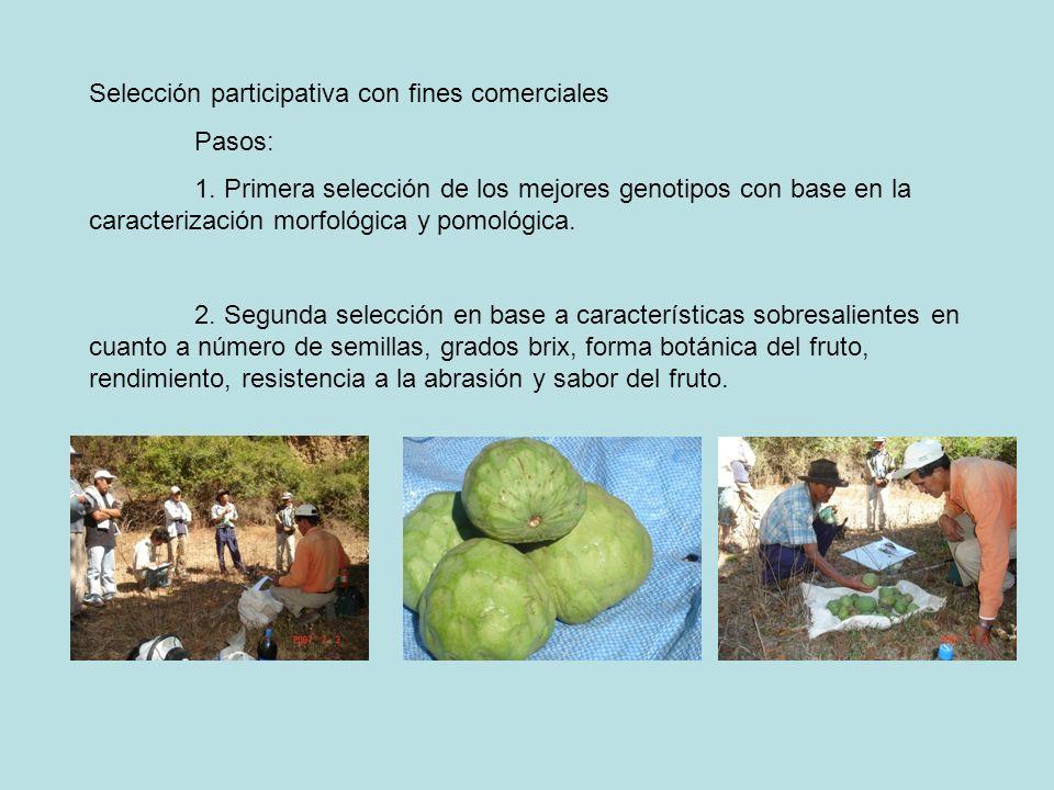 Selección participativa con fines comerciales Pasos: 1. Primera selección de los mejores genotipos con base en la caracterización morfológica y pomoló