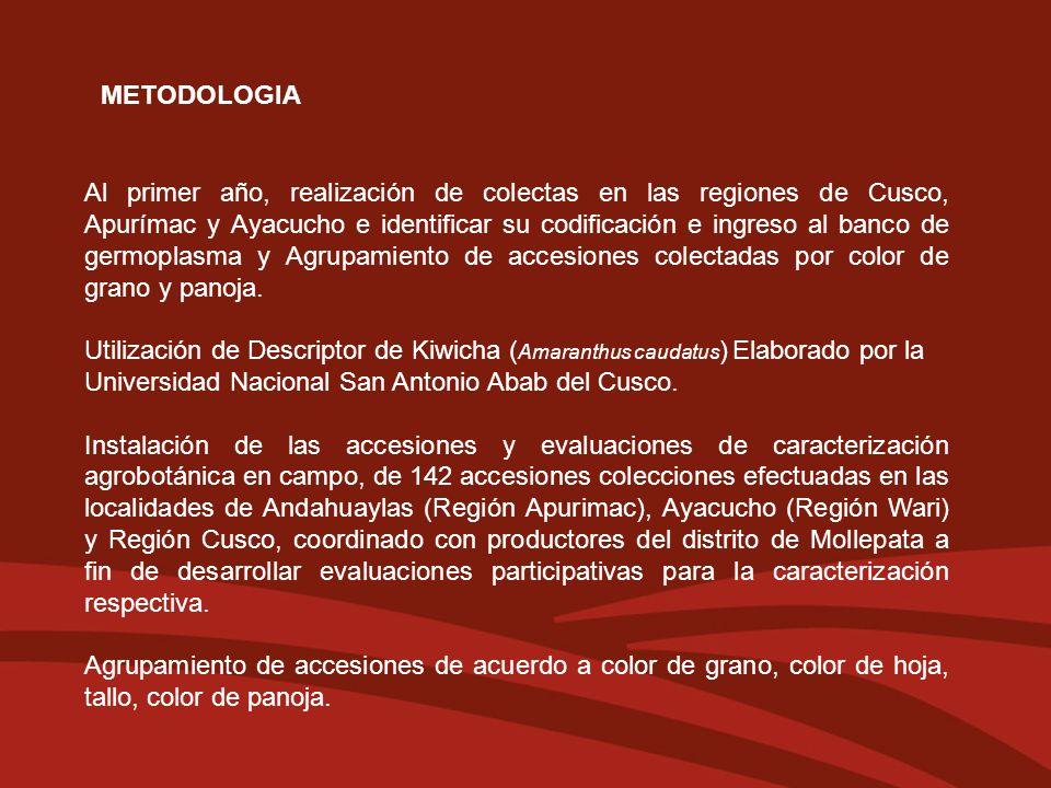 METODOLOGIA Al primer año, realización de colectas en las regiones de Cusco, Apurímac y Ayacucho e identificar su codificación e ingreso al banco de g