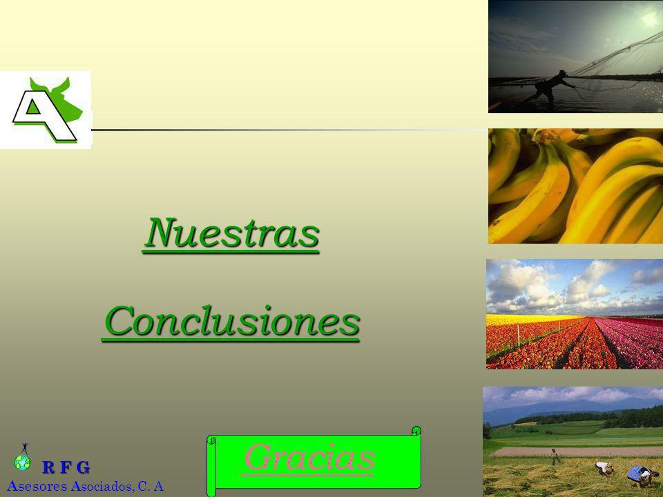 R F G R F G A sesores A sociados, C. A AGROINFORMATICA, C.A.17 Nuestras Conclusiones Gracias
