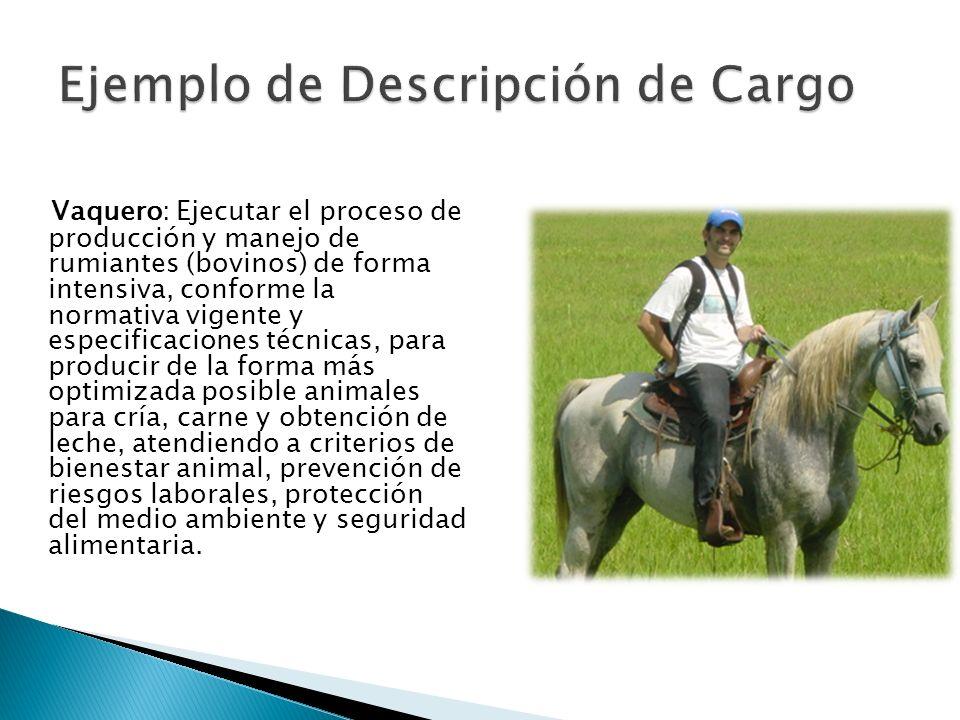 Vaquero: Ejecutar el proceso de producción y manejo de rumiantes (bovinos) de forma intensiva, conforme la normativa vigente y especificaciones técnic